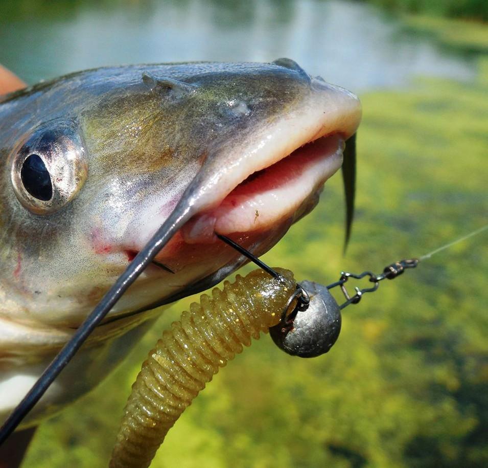 Рыбалка на канального сома