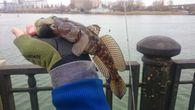 форум ростовских рыбаков набережная