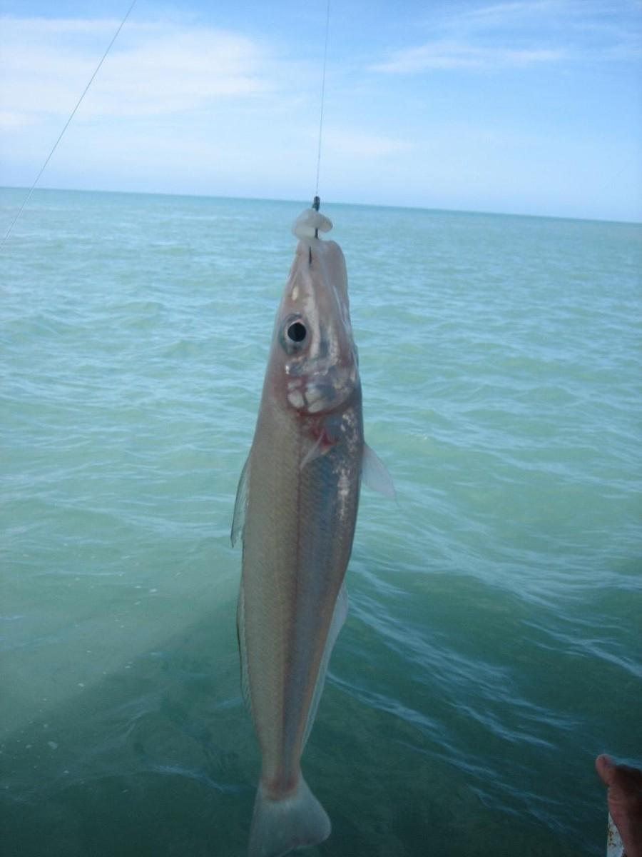 ростовское море рыбалка на толстолоба