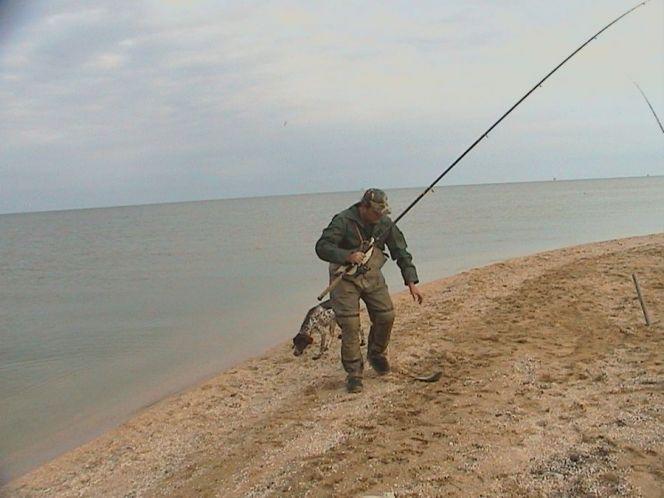 Ловля пеленгаса на азовском