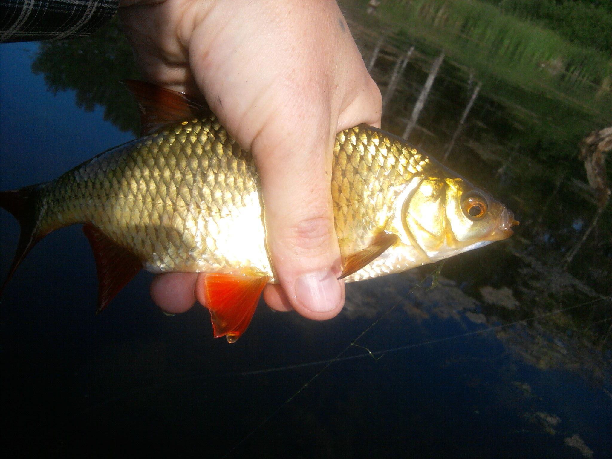 Рыба пойманная в водоеме